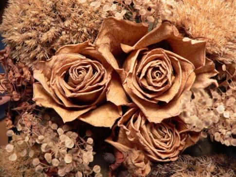 Nên hay không vứt bỏ hồng tình yêu vì phong thủy xấu?