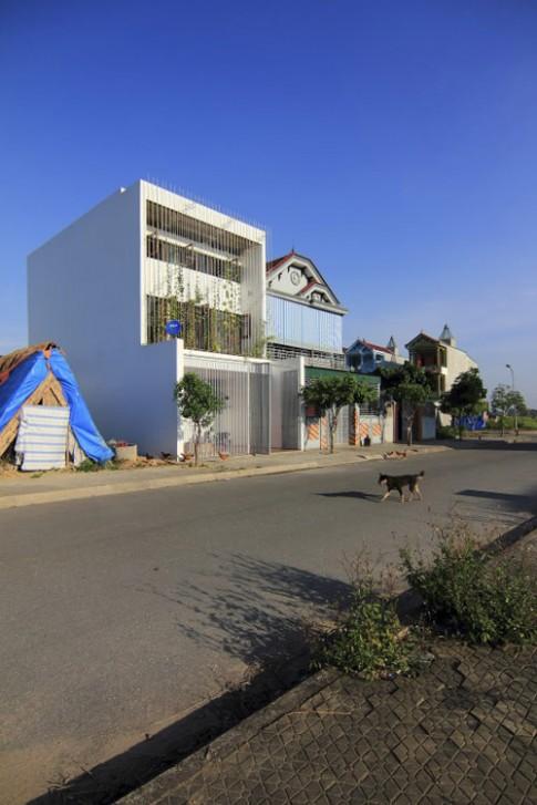 Nghệ An: Vợ chồng nghỉ hưu xây nhà xanh mướt mặt tiền rau