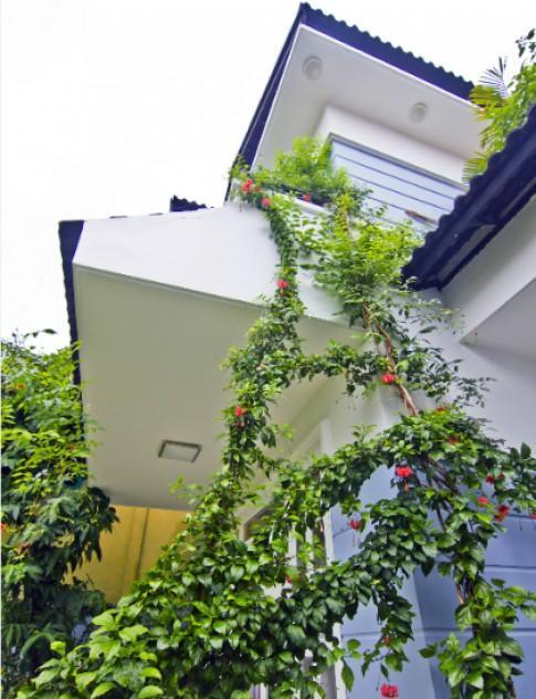 Ngôi nhà tự thiết kế của nữ luật sư ở Sài Gòn