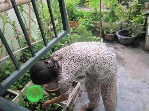 Người mẹ đảm đang trồng rau sạch chữa bệnh vặt cho cả nhà