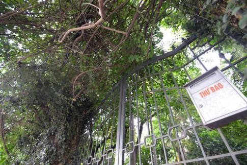 Nhà phủ kín dây leo kỳ lạ ở Hà Nội