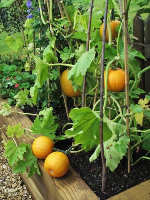 Những loại quả dễ nấu, dễ ăn, dễ trồng vào tháng Ba