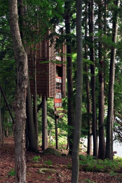 Những ngôi nhà đẹp có cây mọc xuyên mái