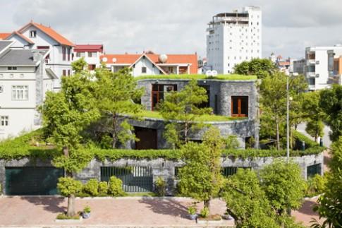 Phủ cây xanh cho mái nhà vừa đẹp vừa mát