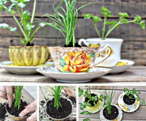 Tận dụng tách trà để trồng cây, cất nữ trang