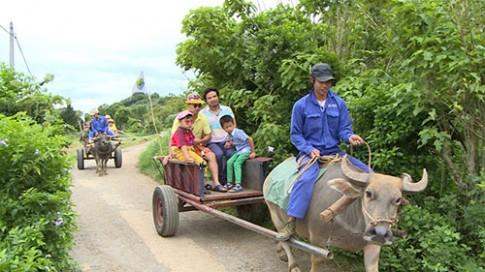 Tập 11 Bố ơi mùa 2: Trải nghiệm cho bò ăn cỏ ở cao nguyên Mộc Châu