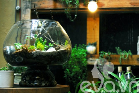 Terrarium: Học cách tự trồng cây trong bình kính