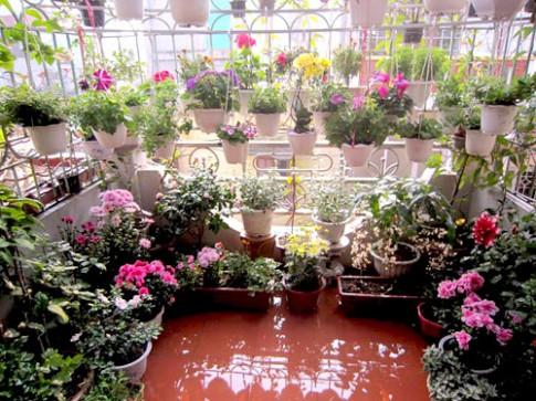 Thái Bình: Vườn hoa trăm chậu không cần bí quyết chăm trồng
