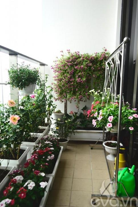 Thăm vườn hoa ban công tuyệt đẹp ở Cầu Giấy