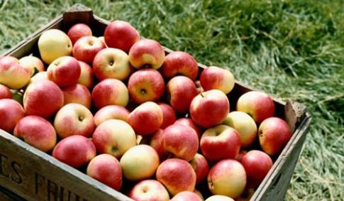Top rau quả ăn dặm nhiều thuốc trừ sâu nhất