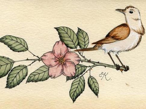 Truyện cổ tích: Chim sơn ca