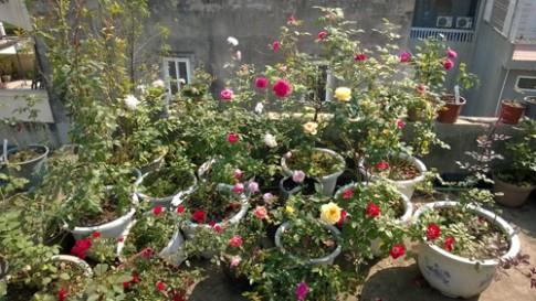 Vườn hoa trăm loại thành hình từ giấc mơ của người đàn ông