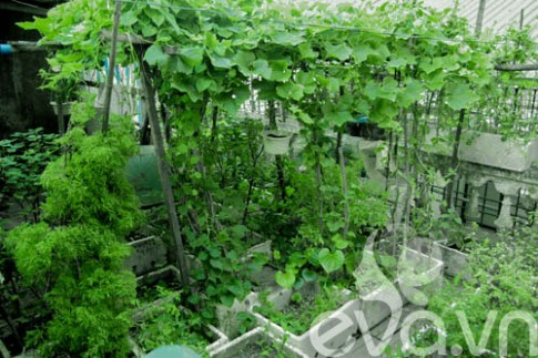 Vườn rau siêu rẻ: 20 năm cho rau sạch 4 mùa