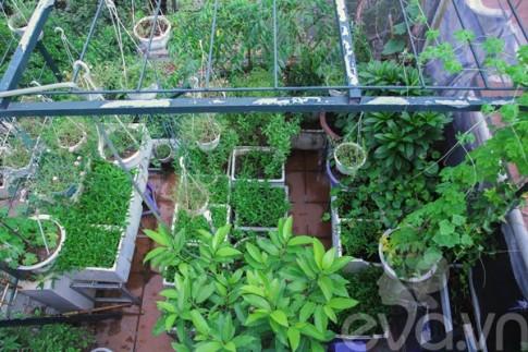 """Vườn rau toàn cây """"độc, lạ"""" ở Hà Nội"""