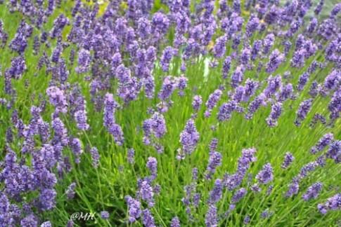 Xuân này trồng hoa gì cho cả năm rực rỡ