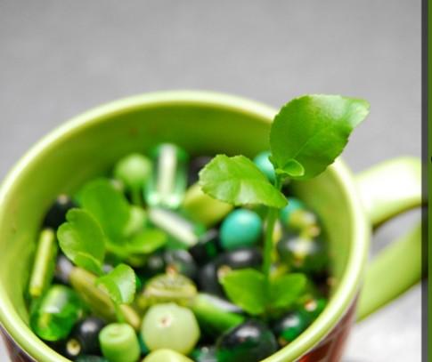7 bước trồng chậu chanh cảnh cực đẹp cho nhà