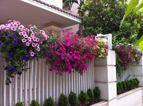 9 loài hoa treo giỏ rực rỡ nhất, dễ trồng nhất trong nhà