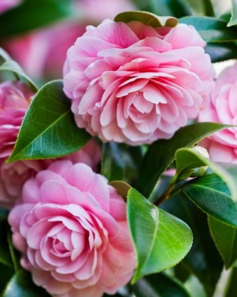 Bất ngờ ý nghĩa 9 loài hoa phổ biến