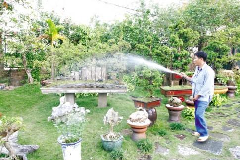 Bí ẩn những loại cây hút khí độc trong nhà