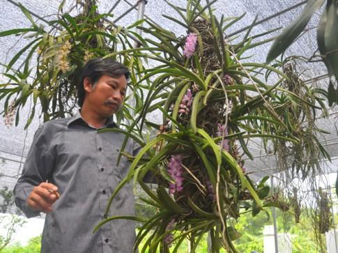 Bí quyết trồng lan Bạch vĩ hổ ra hoa đẹp như ý của tỷ phú Hà thành