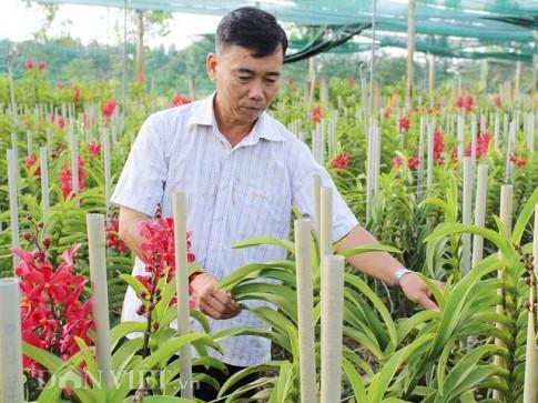 Biến bãi hoang ven sông thành vườn lan tiền tỷ