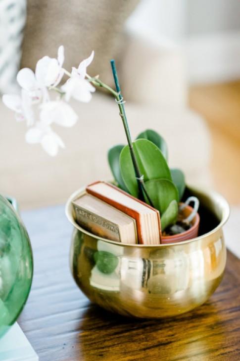Các loại cây dễ sống trong nhà
