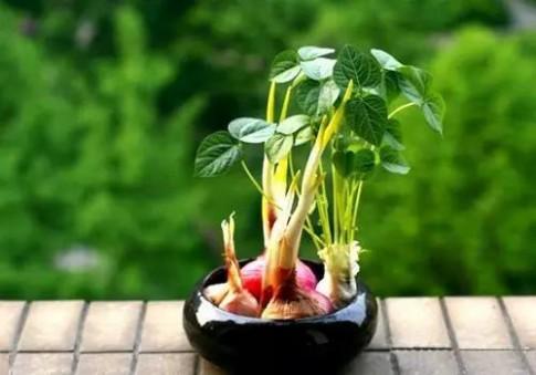 'Cắm' bình hoa nghệ thuật từ rau củ thừa