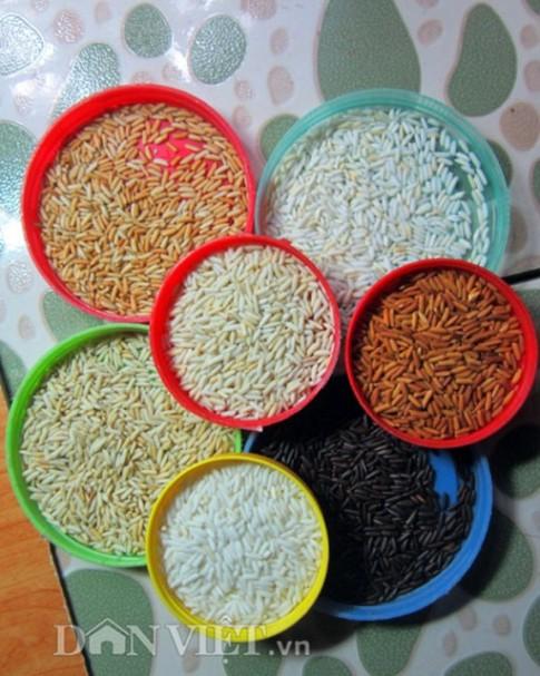 """Độc đáo """"vẽ"""" tranh bằng hạt gạo đồng quê"""