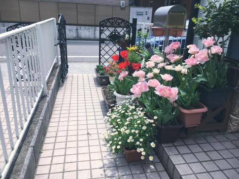 Đường vào nhà ngập sắc hoa của nàng dâu Việt trên đất Nhật