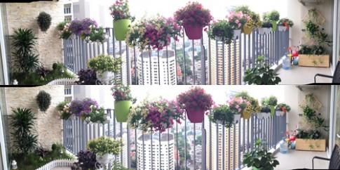 Hà Nội: Vườn ban công bảy sắc ở tầng cao hút gió
