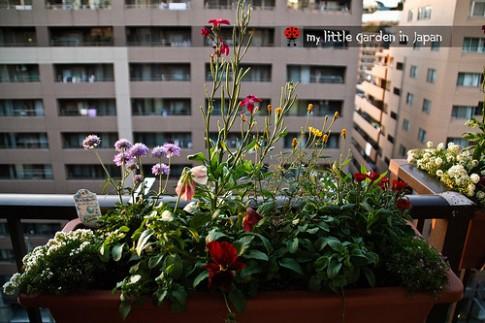Hoa nở rực rỡ nhờ vỏ chuối, cọng rau trong nhà