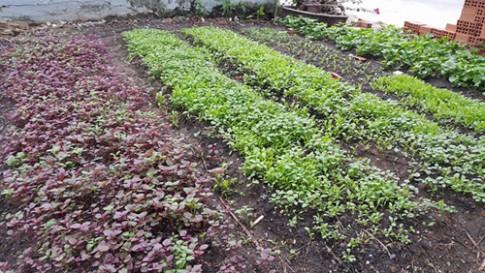 Mẹ Hồ Ngọc Hà cặm cụi vác đất, bón phân trồng rau sạch