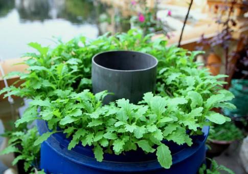 """Muôn kiểu trồng rau """"không đụng hàng"""" của dân thành phố"""