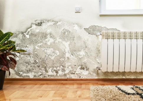 Nhà bị mốc vì hàng xóm xả nước vào tường phân cách