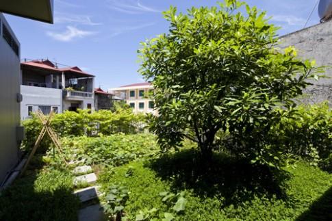 Những sân thượng được phủ đất làm vườn cây