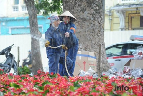 """Thủ đô Hà Nội đang được trang trí bằng """"hoa lạ""""?"""