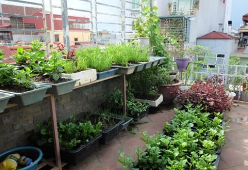 Tiếp ảnh vườn rau, hoa quả bốn mùa trên sân thượng