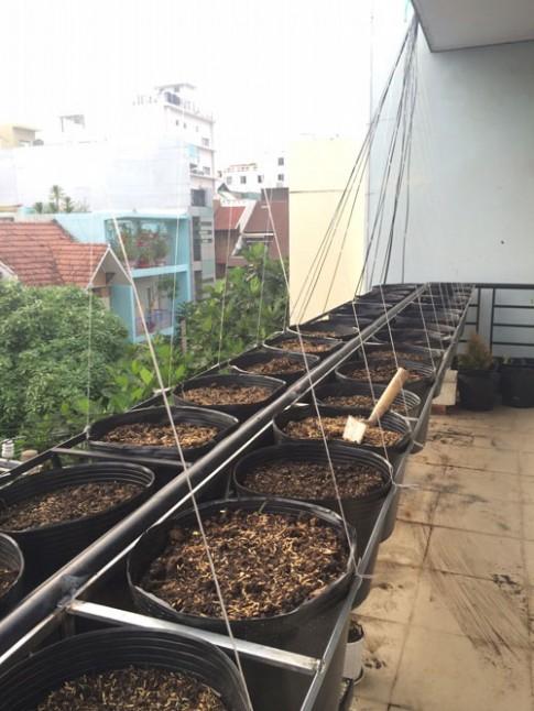 TP.HCM: Văn phòng cho nhân viên thỏa thuê trồng rau sạch