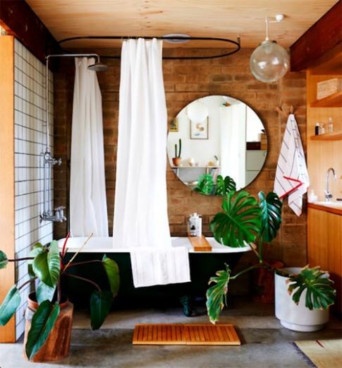 Trồng cây gì trong nhà tắm không cần chăm vẫn đẹp
