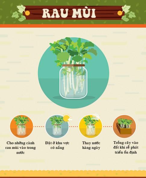 Trồng cây mua một lần ăn mãi (kỳ 5): 20 ngày trồng rau mùi