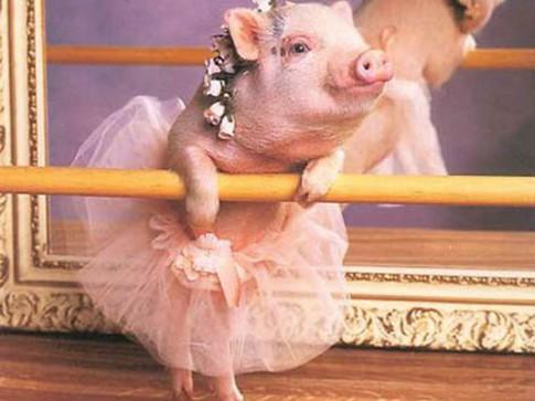 """Văn tả """"lợn xinh như hotgirl, mèo dài 3 mét"""" của trẻ tiểu học"""