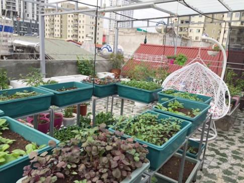 Vườn cây nhiều giống lạ cải tạo từ mái lợp tôn 50 m2