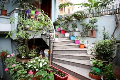 Vườn nhỏ rực rỡ sắc hoa của ca sĩ Bảo Trâm