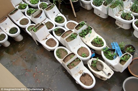 Vườn rau bốc mùi trên sân thượng khiến hàng xóm điên người