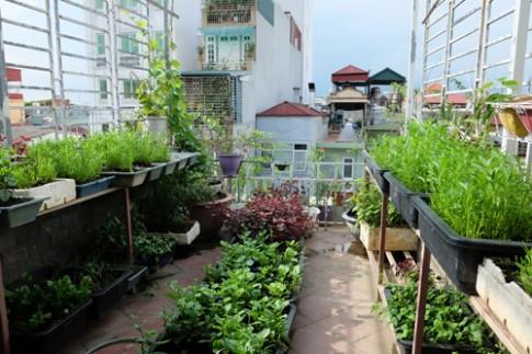 Vườn rau, quả bốn mùa trên sân thượng nhà phố