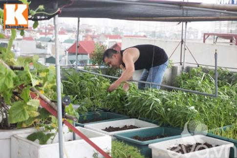Vườn rau sân thượng tốt như vườn quê của ông bố trẻ Hà Nội