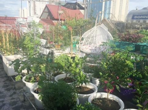 Vườn rau trái trên sân thượng 50 m2