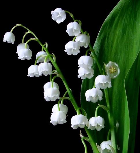 """Bí mật 5 loài hoa """"tiền triệu"""" hiếm có khó tìm"""