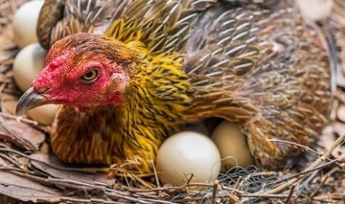 Chỉ cần 5 giây biết ngay trứng hỏng hay trứng tươi mới