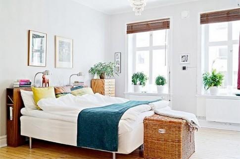 Có nên trồng cây xanh trong phòng ngủ